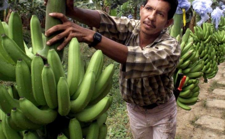 Ventas de bananeros: US$859 millones