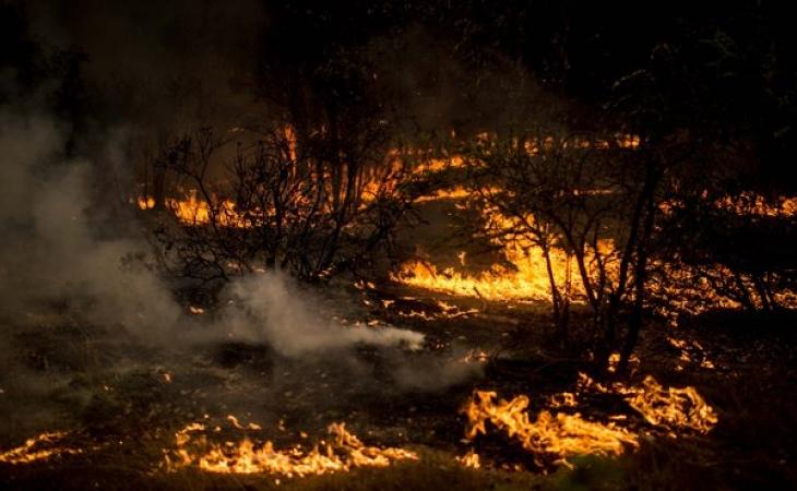 Incendios forestales mantienen en jaque zona sur de Chile
