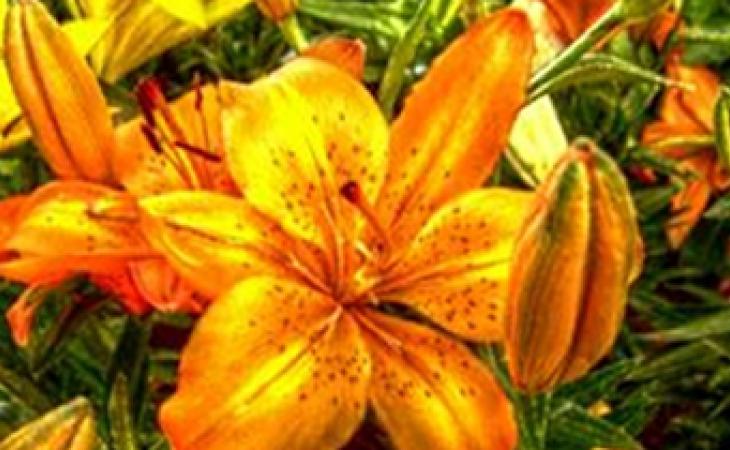 Las Flores Tambien Se Comen El Nuevo Siglo Bogota